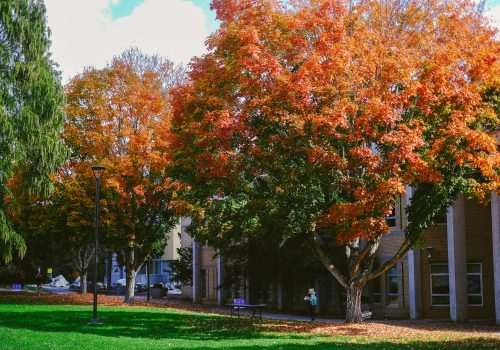 Fall colors on campus